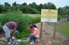 Teens working in the Community Kitchen Garden, growing fresh local food for Virginia's neediest citizens.