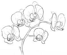 seerosen ausmalbild vorlagen floral pinterest f rben natur und bl ten. Black Bedroom Furniture Sets. Home Design Ideas
