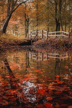 Silence of the leaves..  (by Joachim Mortensen)