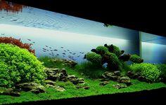 Bubbles Aquarium - Aquascapes (2008 Aquascaping Gallery) http://bubblesaquarium.com/Aquascape/Gallery2008/Gallery2008_MomentsofTranquility.htm#