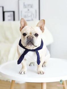 Your pet will love the comfy dogs shirts. It will keep them from shedding and looking super cute! These cute Frenchie clothes are sure to be your dog's favorite and stand out in the paw-ty.#frenchies #frenchiely #frenchbulldogs #bulldogfrances #bulldogs #frenchbully #dogshirts #dogclothing #dogapparel #dogclothes #petclothes #mediumdogs Dog Hoodie, Dog Shirt, Baby Animals Super Cute, Cute Animals, French Bulldog Clothes, Cute Dog Clothes, Dog Raincoat, Dog Boutique, Dog Wear