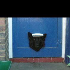 Dog @ the door