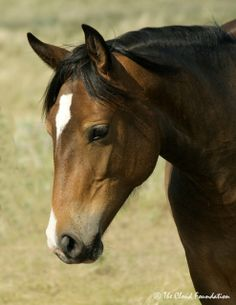 Josie - the 2011 daughter of Trigger & Mae West. She was stolen by Conquistador just before his death and is now in Shane's band. http://www.thecloudfoundation.org/about-us/meet-the-freedom-fund-horses/57-freedom-family-horses