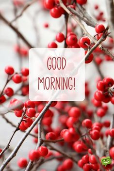 Good morning wish on picture with winter decorative plants. Good Morning Winter Images, Gud Morning Images, Good Morning Cards, Good Morning Picture, Good Morning Messages, Good Morning Good Night, Morning Pictures, Good Morning Wishes, Morning Pics