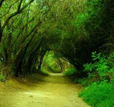 Topanga State Park. My favorite place to go hike.