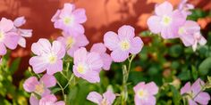 Bloom, Backyard, Plants, Gardens, Flower, Decoration, Flowers, Decorating, Yard