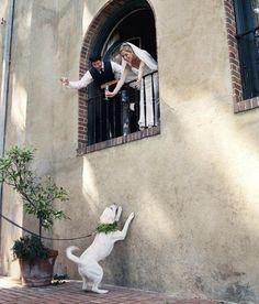 wedding with a dog