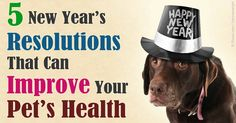 Focusing on the health and happiness of your pet often means getting back to basics - good nutrition, adequate exercise, and more. http://healthypets.mercola.com/sites/healthypets/archive/2016/01/01/5-basics-to-improve-pet-health.aspx