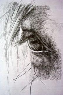 JULIA-CONARTE: TRABAJOS PARA ADULTOS Y CHICOS MAYORES DE 15 AÑOS Pencil Drawings Of Animals, Horse Drawings, Animal Sketches, Drawing Sketches, Art Drawings, Eye Sketch, Drawing Ideas, Sketching, Horse Pencil Drawing