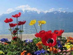 Η φύση απεχθάνεται το κενό....Χωρίς σκιά, χωρίς ήλιο, χωρίς πεταλούδες, χωρίς μέλισσες. Χωρίς φρούτα, χωρίς λουλούδια, χωρίς φύλλα, χωρίς μπουμπούκια!!! δεν είναι όμορφη η φύση.