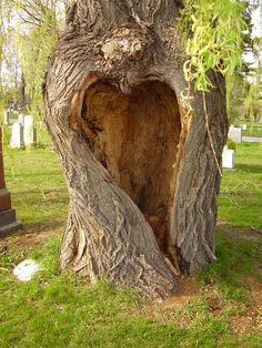 natural, not enhanced HEART in a tree found in a cemetary, Notre-Dame-des-Neiges, Montréal, Québec, Canada.   (I think it's a love note from God reminding us of His unfailing love.