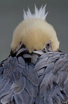 simply-beautiful-world: Shy bird