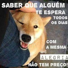 EXATAMENTE! ❤❤❤ #petmeupet #maedecachorro #paidecachorro #cachorro #cachorroterapia #cachorroetudodebom #caopanheiro #gato #labrador #golden #bulldogfrances #pug #luludapomerania #maltes #schnauzer #shihtzu #viralata #bodercollie