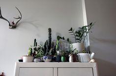 #houseplant inspiration