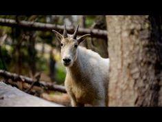 Enchantment Lakes, Leavenworth - WA | Roadtrippers