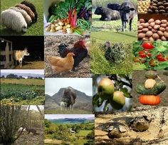 Board Image Borrowed from http://www.rainharvest.co.za/2011/03/organic-farmingas-productive-as-conventional-and-better-at-building-soil/