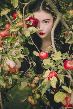 (Fusang, in Mr Orchard's garden.)  就是张辛苑_新浪博客