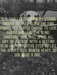 Why God made dogs <3