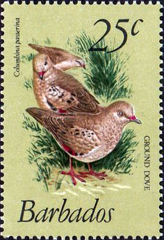Barbados 1979 Birds SG 629 Fine Mint SG 629 Scott 502 Other West Indies Stamps HERE