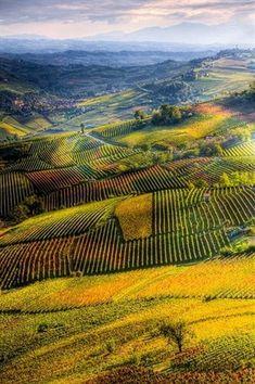 Langhe, Piedmont, Italy  #ItalyTrip