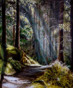 """""""Forest Path"""", 51 cm x 61 cm, oil on canvas, framed, $700, by Cathy Yarwood-Mahy Forest Path, Paths, Oil On Canvas, Waterfall, Paintings, Frame, Artwork, Outdoor, Picture Frame"""