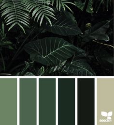 Color Jungle - http://www.design-seeds.com/nature-made/color-jungle