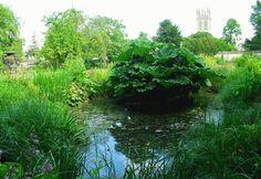 """🌳 Pod drzewami znajdującymi się w ogrodzie botanicznym w Oxfordzie tworzył m.in. J. R. R. Tolkien, a natchnienia szukał Lewis Carroll pisząc """"Alicję w Krainie Czarów """" 🌳 Under the trees located in the Oxford Botanic Garden created, among others, J...."""