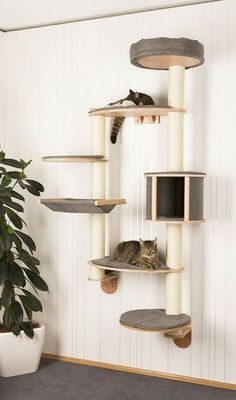 Kerbl Cat Tree Dolomit Tofana XL wall mounted grey *** You can find out more details at the link of the image. (This is an affiliate link) Diy Cat Tower, Cat Wall Shelves, Cool Cat Trees, Cat Towers, Cat Playground, Cat Scratcher, Cat Condo, Cat Room, Cat Furniture