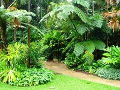 Simple Home Tropical Garden Design Layout Ideas for the House