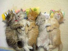Funny cat funny kitten - Google 検索