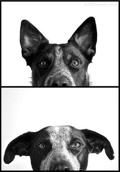 "Tips for taking great ""portraits"" and ""snapshots"" of the four-legged members of your family! :-)"
