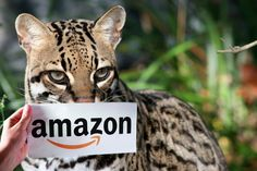 A wonderful way to support the cats at NO Cost to You is to go to your Amazon.com account and sign up for Amazon Smile to have .5% of your purchases donated to Big Cat Rescue.  It is easy to set up.  Learn more at https://bigcatrescue.org/help-free/
