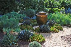A succulent garden saves water and looks beautiful year-round.