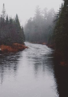 photography pretty winter trees green water fall clouds nature forest autumn river leaves landscapes eerie Camping foggy vertical