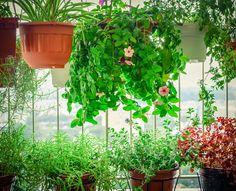 9 Τρόποι να κρατήσεις το σπίτι σου δροσερό το καλοκαίρι!  #aircondition #howto #tip #tips #ανεμιστηρας #δροσια #ζεστη #καλοκαιρι #κλιματισμος #σπιτι HOME TIPS Pots, Feng Shui, Plank, Herbs, Blog, Lawn And Garden, City, Jars, Herb