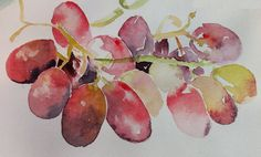 Red grapes, watercolour, 2014