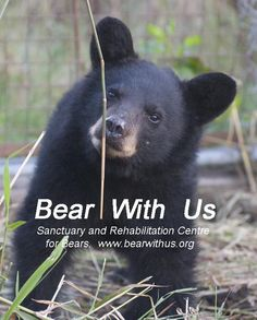 Bear With Us provides educational information regarding bears, bear behaviour as well as promoting co-existence between people and bears to reduce conflicts.