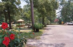 Baton Rouge KOA | Camping in Louisiana | KOA Campgrounds