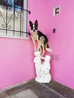 Photographer and her rescue dog make city walks more fun with balancing tricks  --    When I adopted my herding mix dog, I knew the average walk wasn't going to cut it for this high-energy guy. Here's how we made things more interesting (plus plenty of photos)!