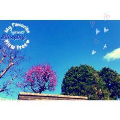 【ayahana157】さんのInstagramをピンしています。 《💙#BlueLover ┈┈┈┈┈┈┈┈┈┈┈┈┈┈┈┈┈┈┈┈┈┈ ❖武田塗装店 by TakedaPainting© ・PaintWork & WoodWork & CraftWork* ❖TPL by Takeda Painting© ・Handmade Original Products by Wood* ┈┈┈┈┈┈┈┈┈┈┈┈┈┈┈┈┈┈┈┈┈┈ いつも皆さまありがとう(♡ϋ)ノ Thank U for Like & Comment & Follow-up  will be My Encouragement♬ ┈┈┈┈┈┈┈┈┈┈┈┈┈┈┈┈┈┈┈┈┈┈ #Palmtree × #Peace * ⋆︎ 年末、盆栽に水やりをしてて… やけに#梅 の蕾が早いなぁ…って思ってたら 12月は暖かかったから もう、あちらこちらで梅が¨̮❤︎ ⋆︎ 青空にピンクは映える⤴︎⤴︎ 盆栽は紅白の梅の木もあるし、楽しみ増えた♬*゚ ⋆︎ 絢爛豪華なサクラもスキだけど、 何だか梅の花がスキ。…