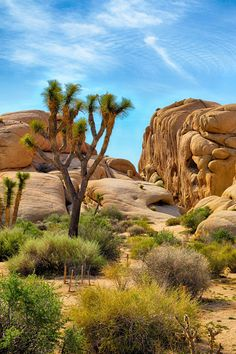 Joshua Tree National Park in the USA