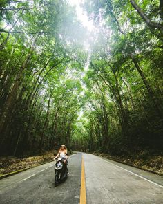 Speeding through the jungle by eljackson