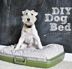 DIY Suitcase Dog Bed.  A great re-purpose project for your furry friend!