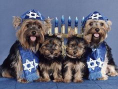 chanukah I couldn't figure out whether to put this under Judaica or Pets - Just so cute - and look how the pups each are leaning into the parents - just too cute