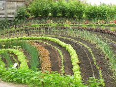 vegetable garden in a national geographic, of a farm , who did 300 acres like this and it stopped pesticide out break, plus companian planting stimulates growth Potager Garden, Veg Garden, Edible Garden, Garden Boxes, Garden Planters, Vegetable Gardening, Farm Gardens, Outdoor Gardens, Amazing Gardens