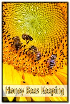 As the worker perform their everyday routine of keeping their hives accumulating plant pollen and also offering the queen bee they create some substances to have helpful features and also uses for recovery. Starting A Beehive, Types Of Bees, Bee Pictures, Worker Bee, Nutrition Store, Bee Pollen, Honey Bees, Queen Bees, Bee Keeping