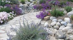 """The """"stones"""" in the path are recycled concrete. The boulders not only add a natural look to the space that plays off the concrete, but they also line a dry creek bed that provides drainage for runoff. The soft plant palette is drought tolerant, with pops of purple"""