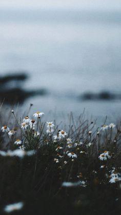 Musa Akkaya, Hintergrund,post_tags] in 2020 Wallpaper Hd Flowers, Plant Wallpaper, Tumblr Wallpaper, Nature Wallpaper, Wallpaper Backgrounds, Spring Wallpaper, Phone Backgrounds, Aesthetic Backgrounds, Aesthetic Iphone Wallpaper