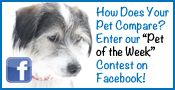 Pet of the Week Facebook Contest