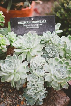 """Mexican Snowball (photo by """"le robins nest, blog)"""
